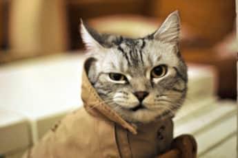 Здравствуйте, я ваш котик