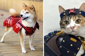 Самурайские доспехи для собак и кошек