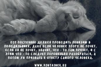 Нормальный кот обязан