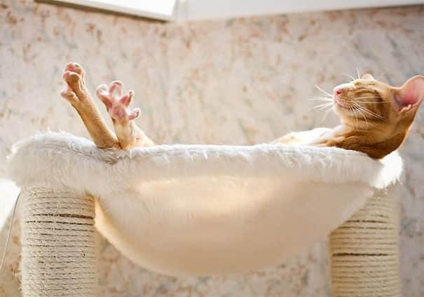 Кошка в солнечных лучах