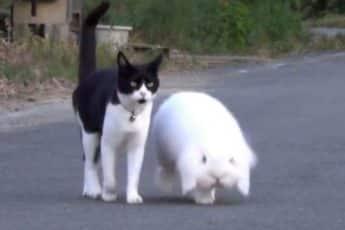 Кошка и кролик