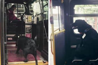 Почетный пассажир автобуса