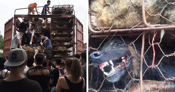 Убийство животных