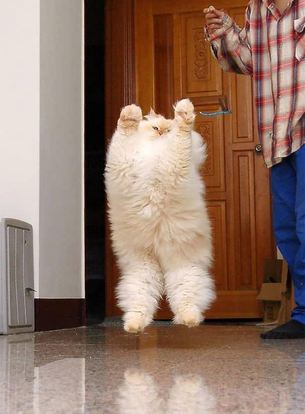 Самые пушистые котики