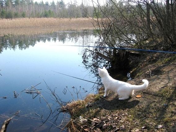 Котик на рыбалке