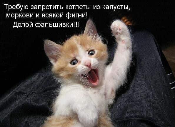 Протест котенка