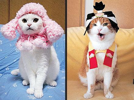 ГлаМурные кошки
