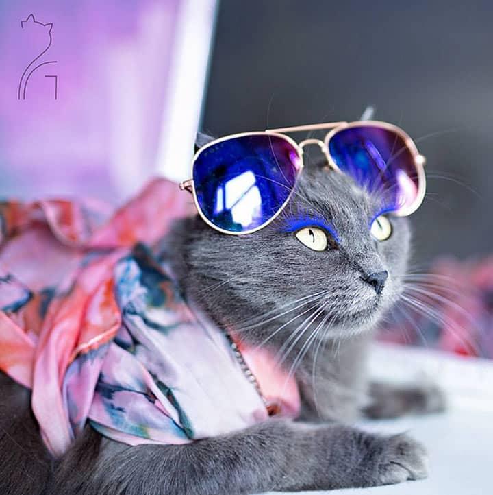картинки котики с украшениями нашем интернет-магазине