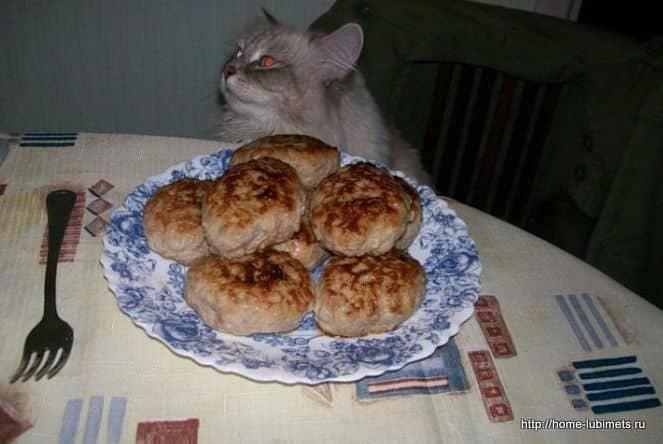Котлеты для кошек