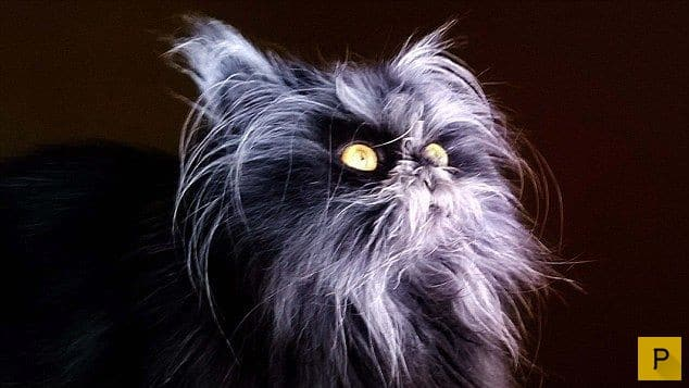 Кошка, как собака