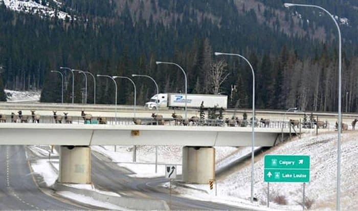 мост для безопасной миграции диких животных