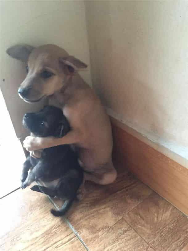 Бездомные щенки постоянно обнимаются