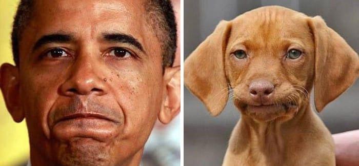 Двойник собачий