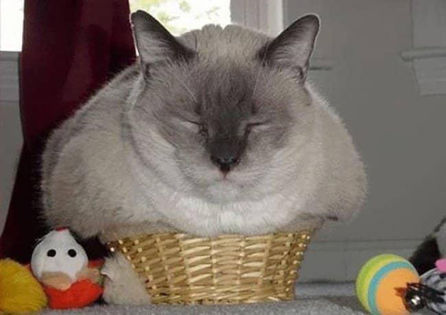Коты трансформеры