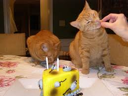 Кошка в день своего рождения