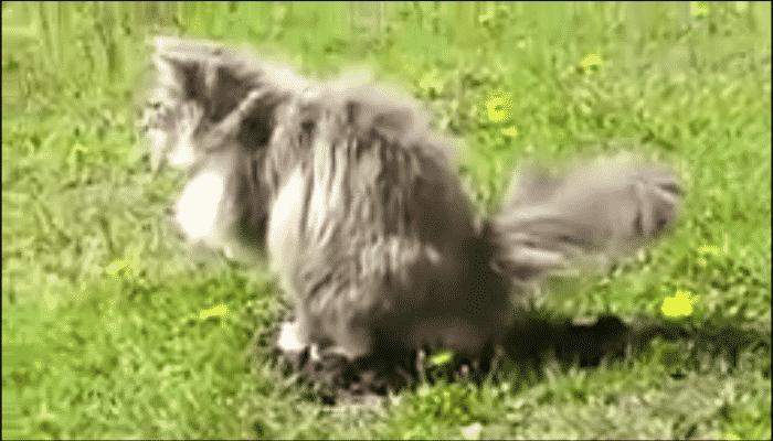Кот опозорил крота