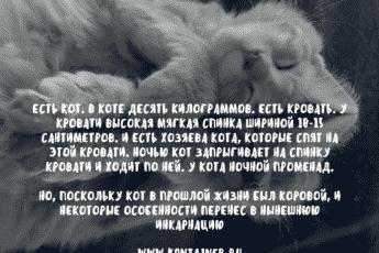 История про кота