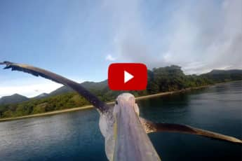 big-bird-pelican-gopro-greystoke-mahale-tanzania-coverimage