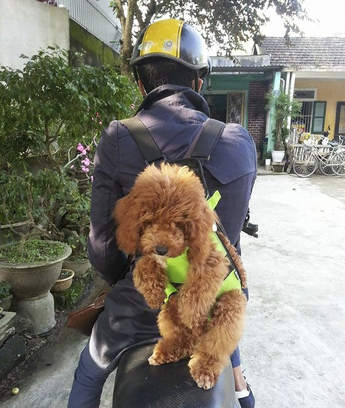 carry_his_dogs_around_wherever_he_goes