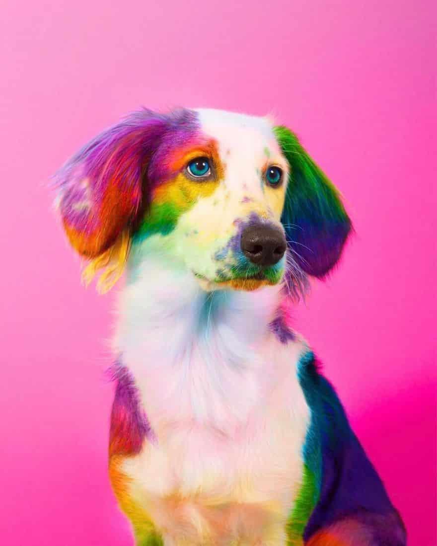 dog_rainbow