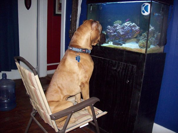 fish_watching