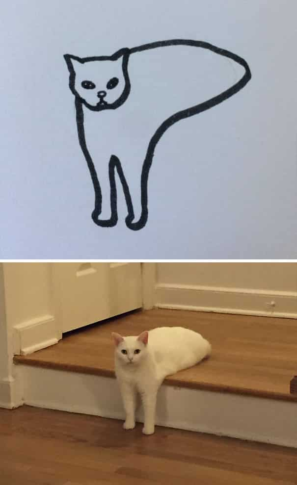 funny_cats