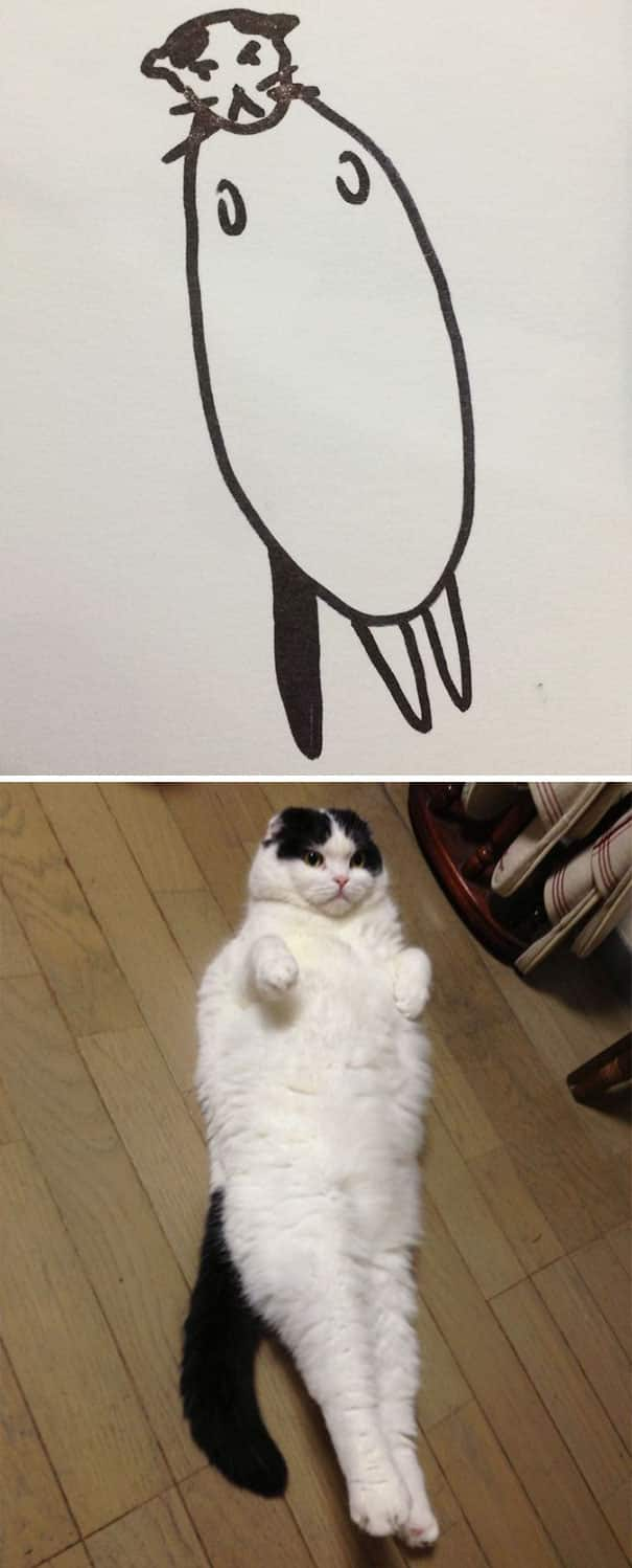 fat_cat_picture