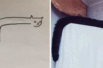 funny_drawn_cats