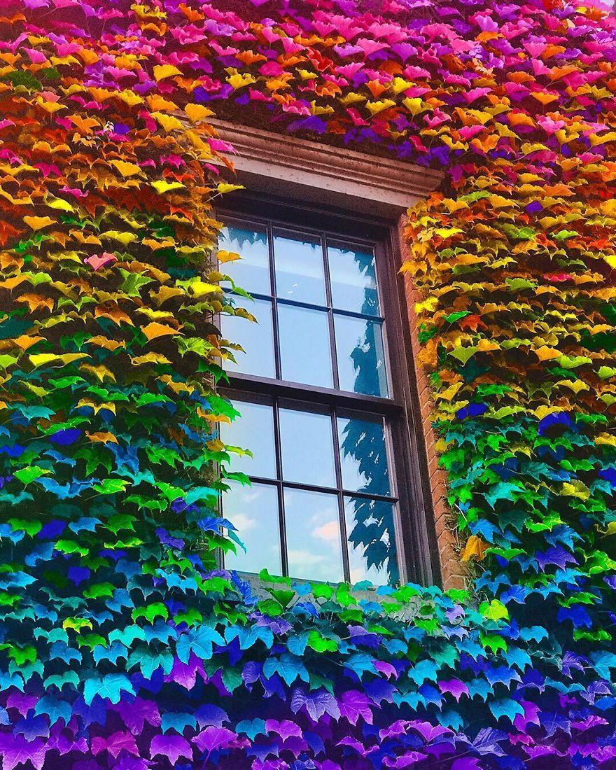 window_flowers