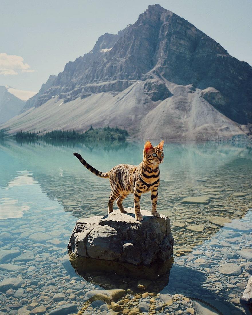 adventures-cat