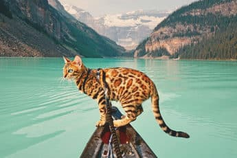 adventures-suki-the-cat-canada-coverimage
