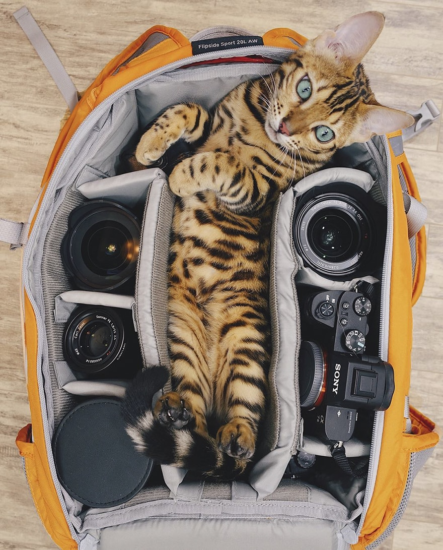 adventures_cat_bag_travel