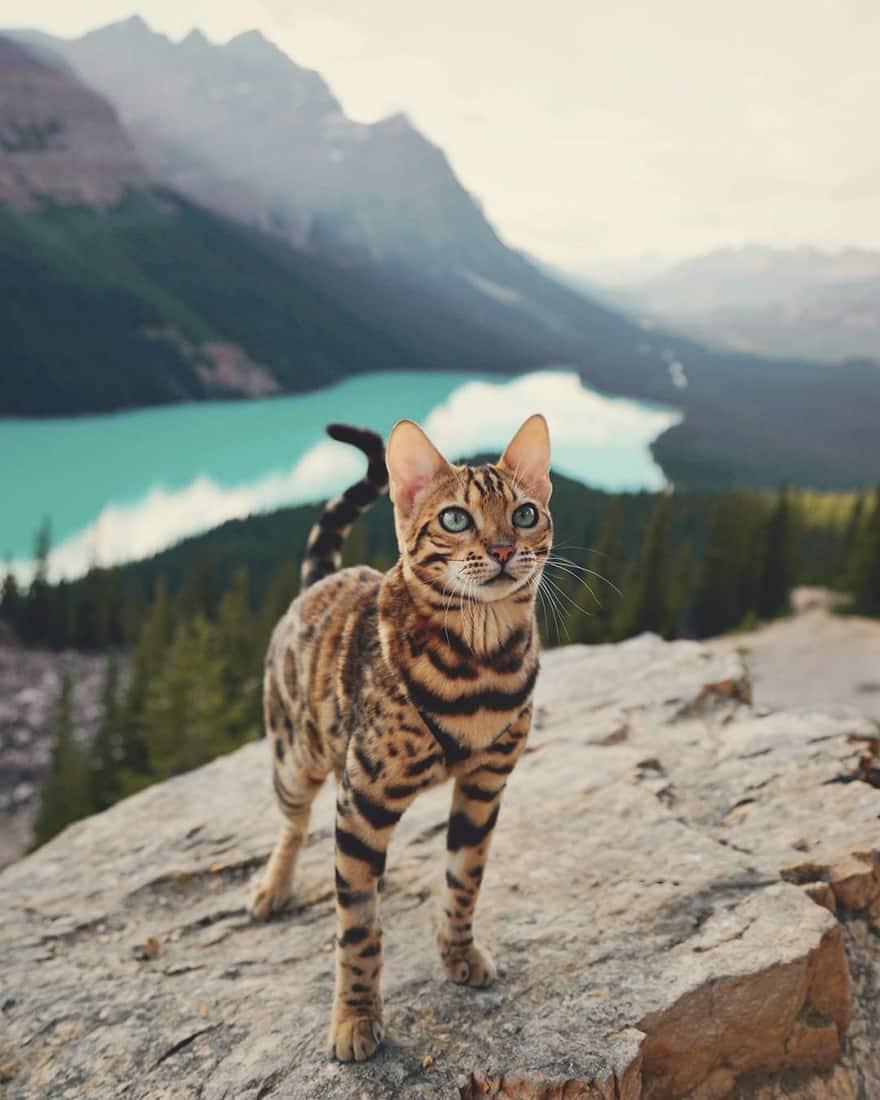adventures_cat_canada