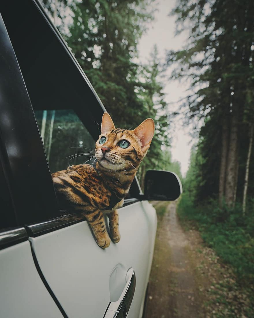 adventures_cat_car