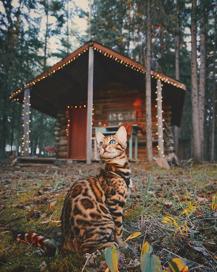 adventures_cat_house_wood