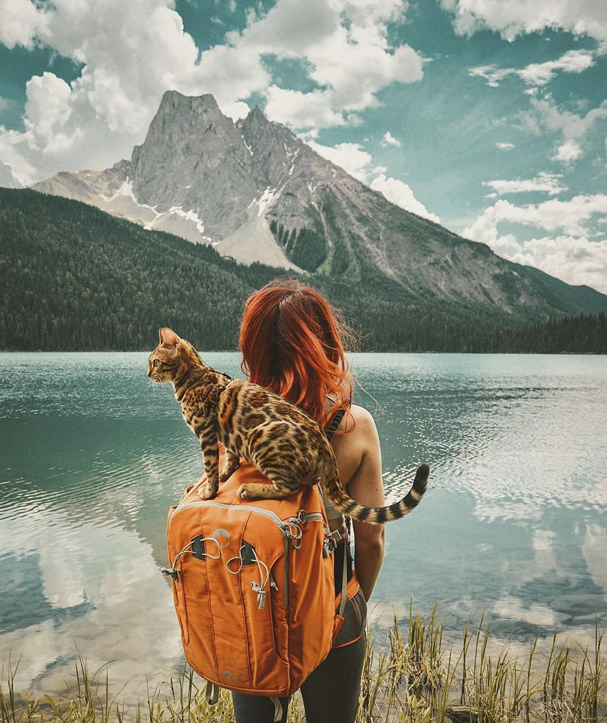 adventures_cat_mountain