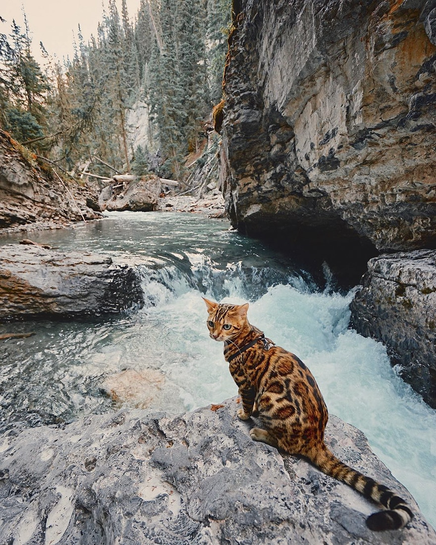 adventures_travel_cat