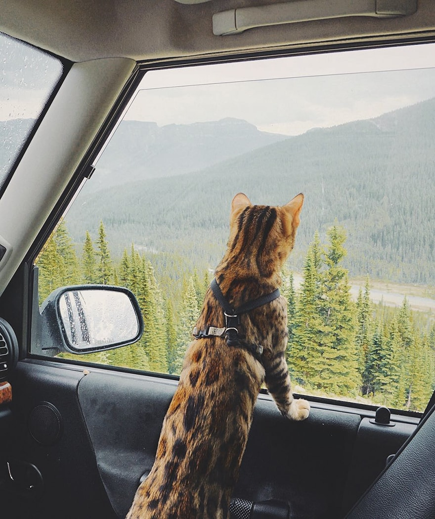 adventures_travel_cat_car