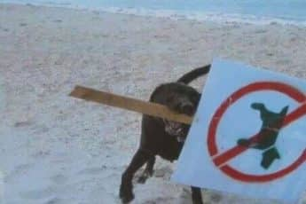 animals_rules_break
