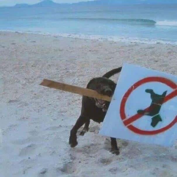 animals_rules_break