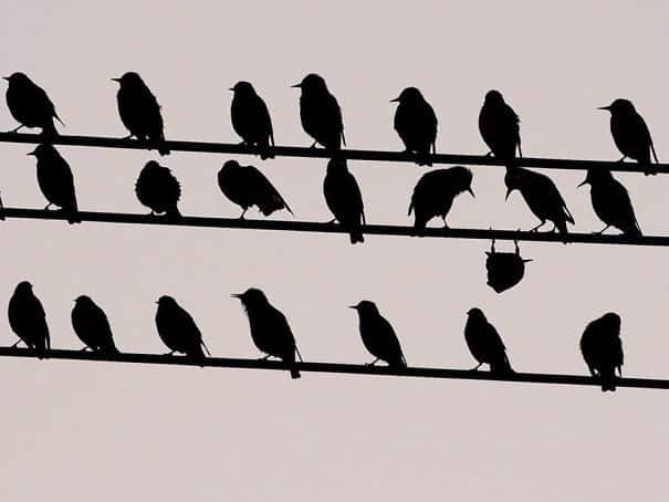 birds_system