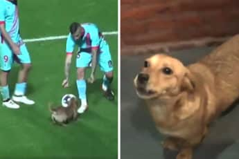 dog-interrupts-soccer-game-argentina-coverimage