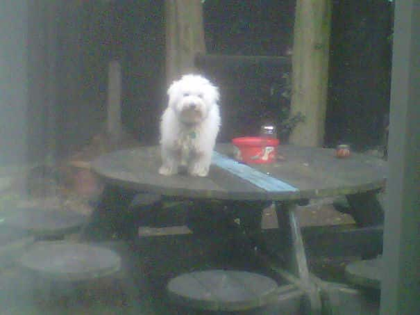 dog_on_table