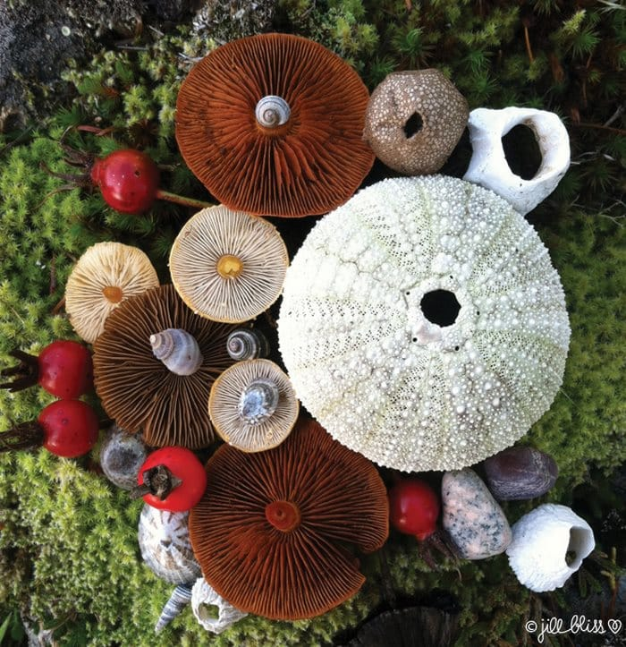 mushrooms-nature-jill-bliss
