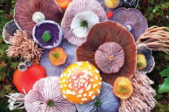 mushrooms-nature-medley-photos-jill-b
