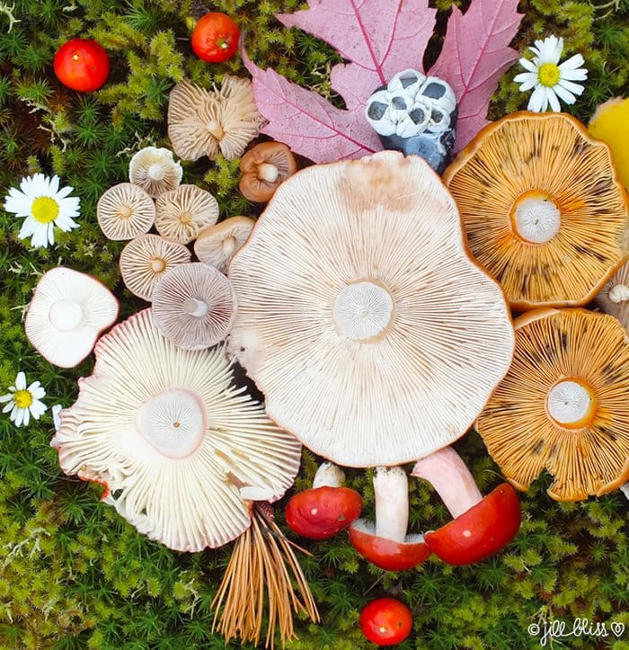 mushrooms_beautiful