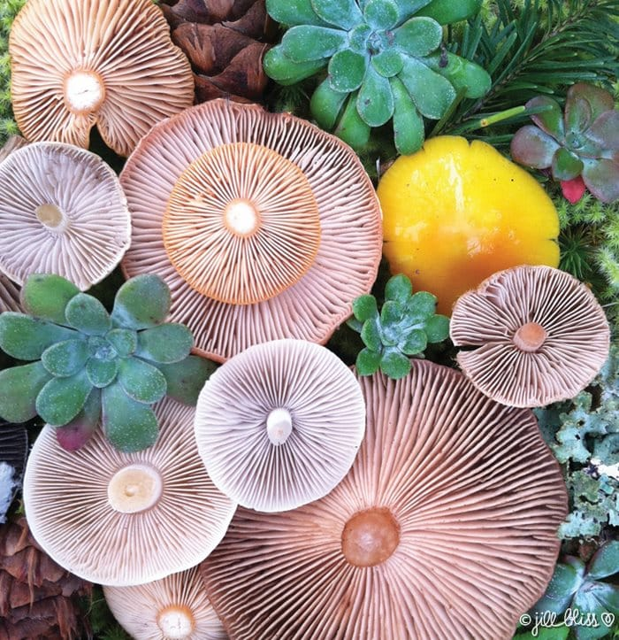 mushrooms_colors