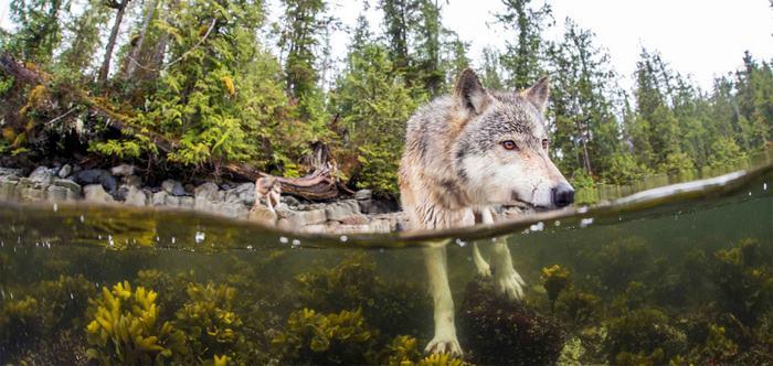 seafood_ocean_wolves