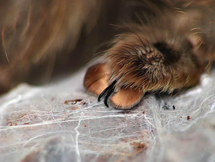 spider_manicure