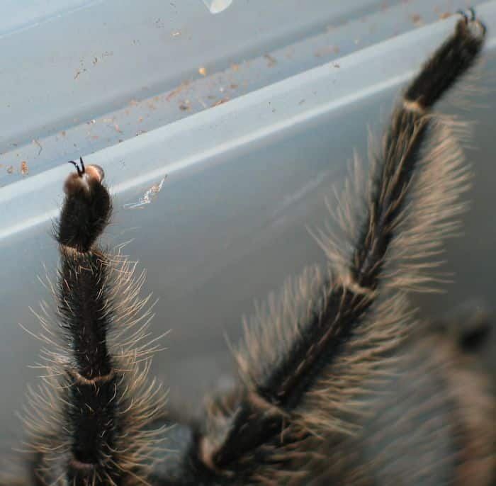 tiny_claws_spider